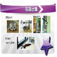 【贝尔宠物医院】烟台最好的宠物医院 烟台宠物医院